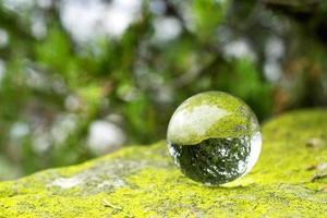 une boule de lentille sur une mousse verte photo