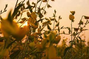 fleur de chanvre avec fleurs et fleurs de jardin photo