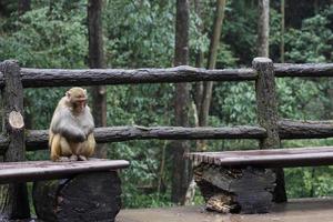 primate sur banc photo