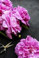 Bordure de fleurs de pivoine sur fond noir photo