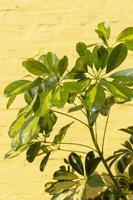 gros plan des feuilles vertes photo
