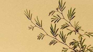 gros plan d'une plante verte photo