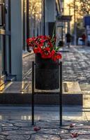 bouquet fané de tulipes rouges dans la poubelle photo