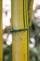 Bambou dans la forêt en plein air à Rio de Janeiro photo
