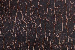 racines plantées dans le sol photo