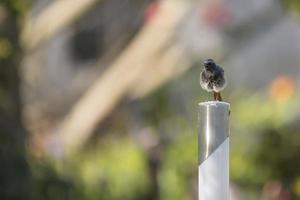 oiseau sur un poteau photo