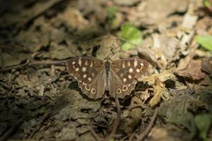 petit papillon sur feuillage automnal sec photo