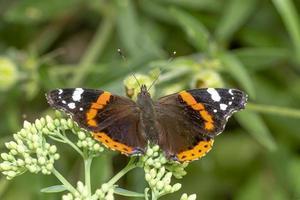 papillon aux ailes ouvertes photo