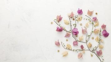 vue de dessus fleurs d'automne avec espace copie photo