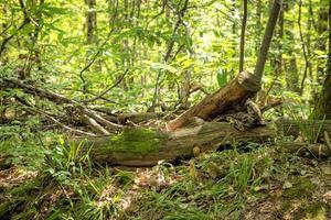 Vieille souche d'arbre dans une forêt verte photo