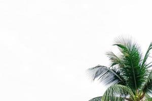 cadre de feuille de noix de coco isolé sur fond blanc avec espace copie, concept d'été. photo