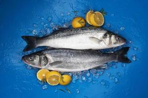 poisson bar sur glace sur fond bleu vue de dessus photo