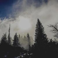 fond carré d & # 39; arbres et de brouillard avec soleil photo