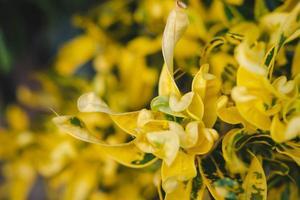 fond de feuille jaune. photo