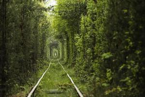 tunnel naturel d'amour formé par les arbres en ukraine photo