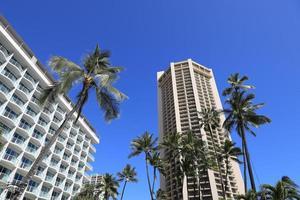 hôtels de luxe et palmiers à waikiki beach hawaii photo