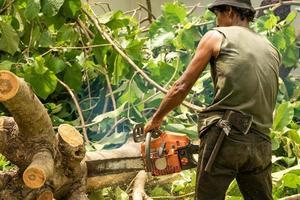 arboriculteur coupant la bûche à la tronçonneuse avec de la sciure éclaboussant mouvement flou de scie à chaîne. photo