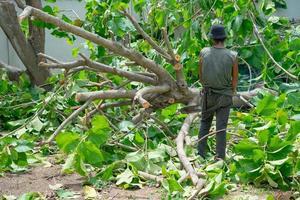 Retour portrait d'homme arboriste tenant la tronçonneuse et regardant le grand arbre posé sur le sol photo