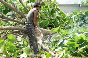 Portrait d'arboriculteur coupant les branches d'un arbre de teck doré par la tronçonneuse avec mouvement de sciure floue volant autour. photo
