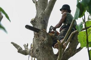 Portrait d'arboriculteur tenant sur l'arbre avec une tronçonneuse avec un fond de ciel clair. photo