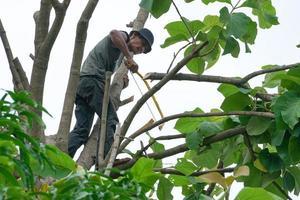 Portrait d'arboriste tenant sur l'arbre avec sa main avec un fond de ciel clair photo