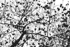 silhouette d'arbre nu en noir et blanc photo
