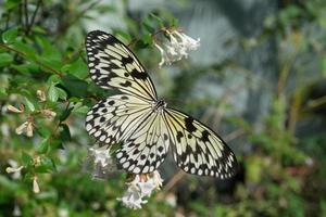 papillon assis sur des branches vertes dans la serre photo