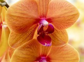 Gros plan d'une belle fleur d'orchidée orange photo