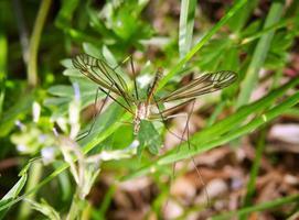 insecte sur l'herbe photo
