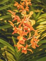 orchidée dans la nature photo