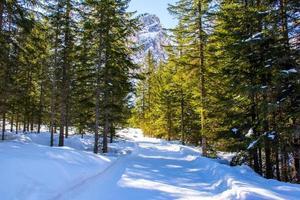 route enneigée dans les bois photo
