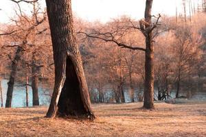 arbre solitaire dans un parc ou une forêt d'automne ou de printemps avec un grand creux photo