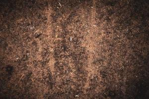 Gros plan de fond de sciure de bois photo