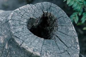 Nid d'oiseau en forme de coeur dans le tronc creux close up photo