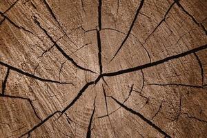 texture de fond en bois photo
