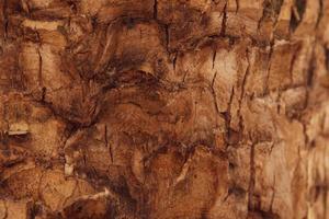 Texture de fond de l'écorce brune d'un arbre photo