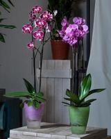 Papillon pourpre fleur d'orchidée plante phalaenopsis photo