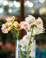 papillon orchidées phalaenopsis blume close up photo