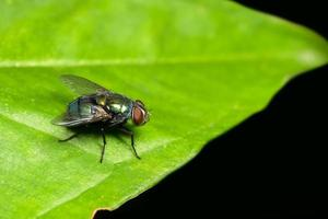 insecte mouche macro photo