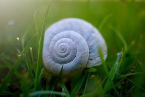 bel escargot blanc dans la nature photo