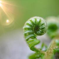 belle feuille de fougère verte dans la nature au printemps photo