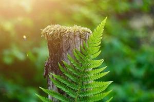 feuille de fougère verte dans la nature au printemps photo