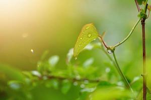 plantes vertes dans la nature au printemps photo
