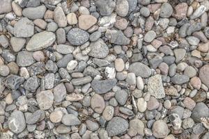 Cailloux gris sur la plage de la mer avec des dépôts d'algues et d'herbes séchées photo