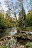 Ruisseau de montagne allemand qui traverse la forêt photo