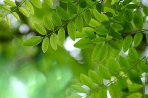 feuilles d'arbre vert au printemps fond vert photo