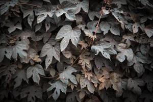 fond de texture de feuilles vertes photo