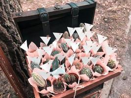 De nombreux petits cactus différents dans de beaux emballages roses dans une boîte en bois photo