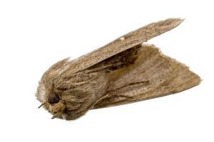 papillon de nuit brun mort se trouve sur le dos avec ses pieds sur photo