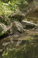 des pierres se trouvent sur la rive d'un ruisseau et se reflètent dans l'eau photo